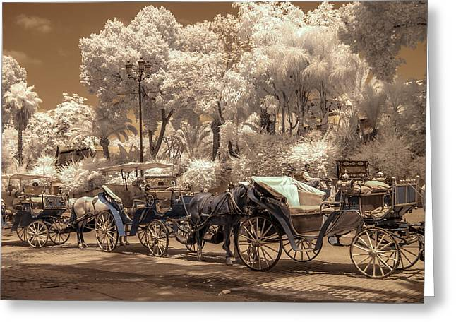 Marrakech Street Life - Horses Greeting Card