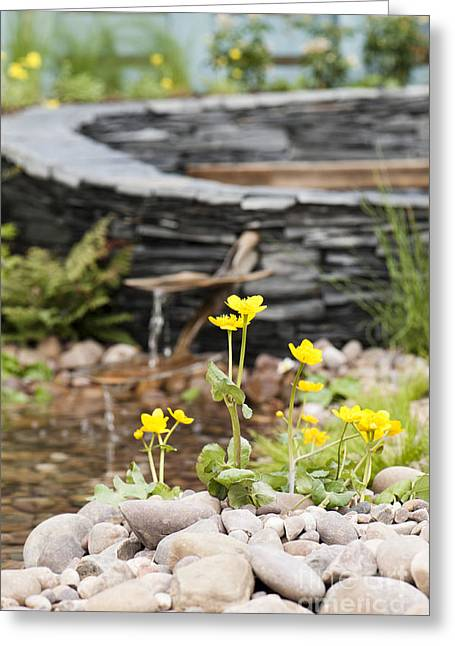 Marsh Marigolds Greeting Card by Anne Gilbert