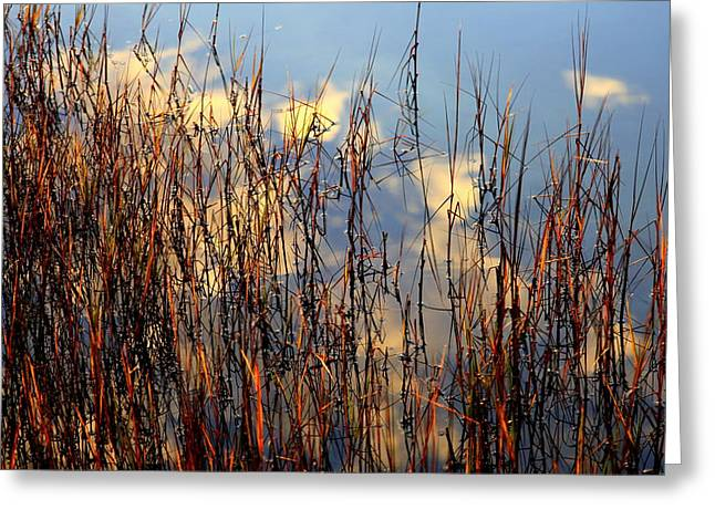 Marsh Mellow Clouds Greeting Card by Karen Wiles