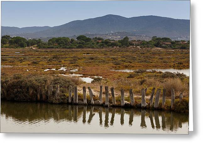 Marsh Greeting Card by Paul Indigo