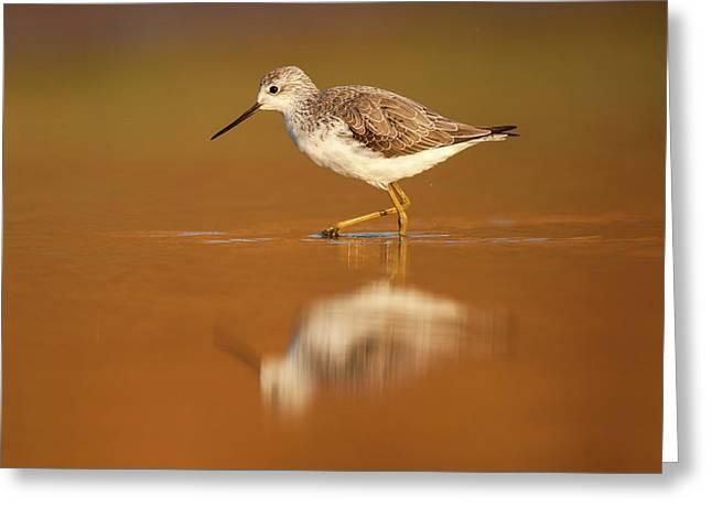 Marsh Sandpiper (tringa Stagnatilis) Greeting Card by Photostock-israel