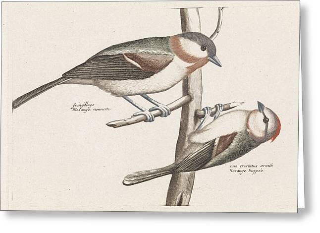Marsh Tit And Crested Tit, Anonymous, Johan Teyler Greeting Card