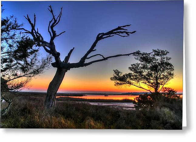 Marsh Tree Sunrise Greeting Card by Ed Roberts