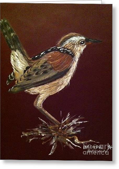 Marsh Wren Greeting Card by Brenda Brown