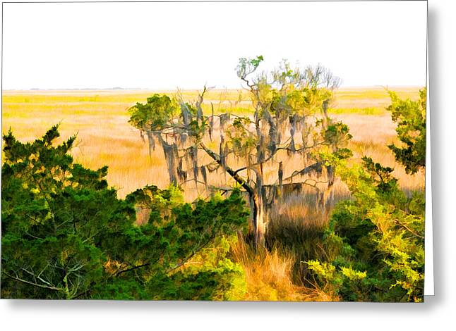 Marsh Cedar Tree And Moss Greeting Card