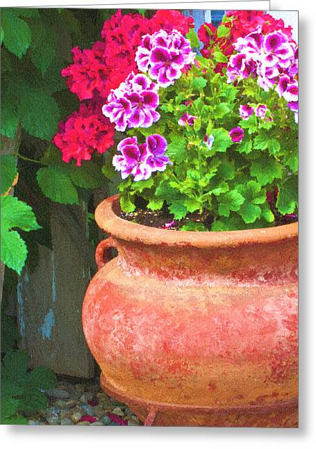 Martha Washington Geraniums In Textured Clay Pot Greeting Card by Sandra Foster