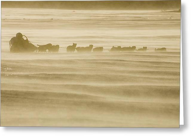 Martin Buser Runs On The Yukon River On Greeting Card by Jeff Schultz