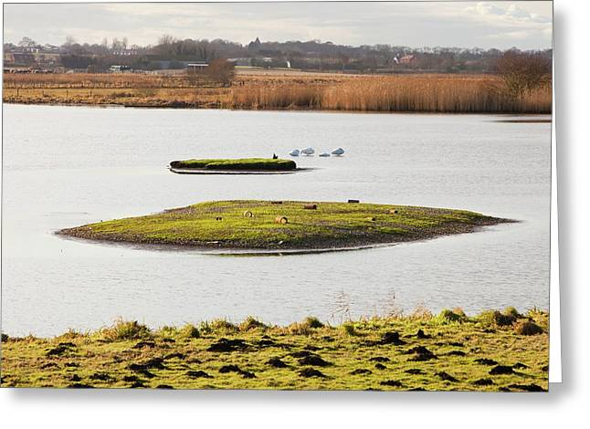Martin Mere Bird Reserve Greeting Card