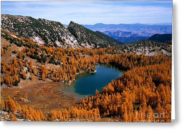 Martin Peak And Cooney Lake Greeting Card by Tracy Knauer