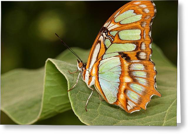 marvelous Malachite Greeting Card by Ruth Jolly