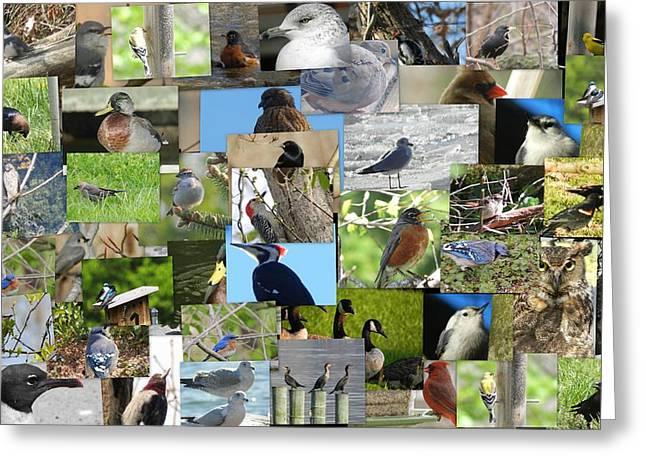 Maryland Birds Greeting Card by Tom Ernst