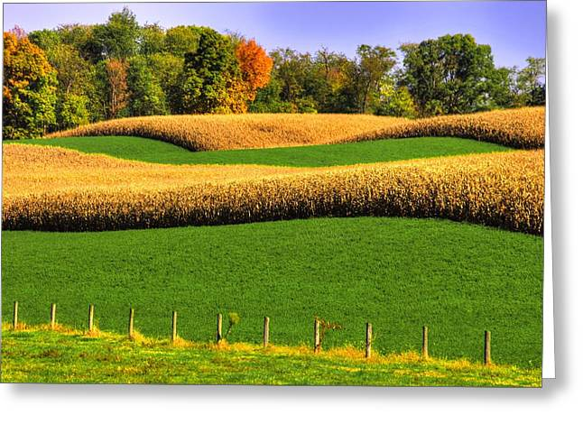 Maryland Country Roads - Swales Greeting Card by Michael Mazaika