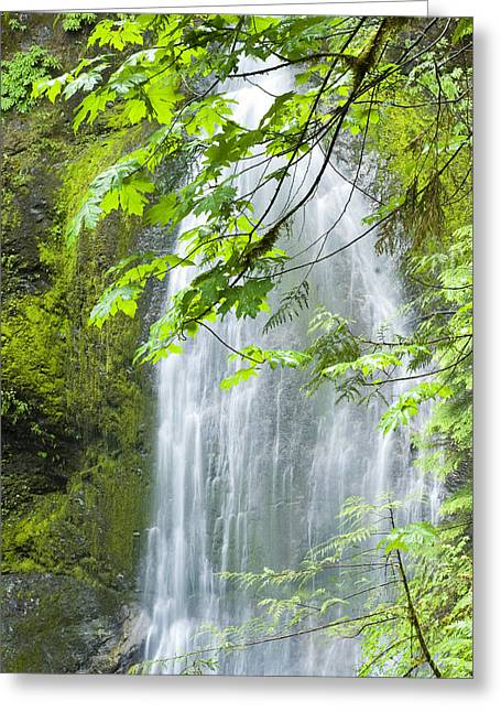 Marymere Falls, Olympic National Park Greeting Card by Josh McCulloch Photography