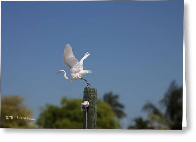 Mary's Egret Greeting Card