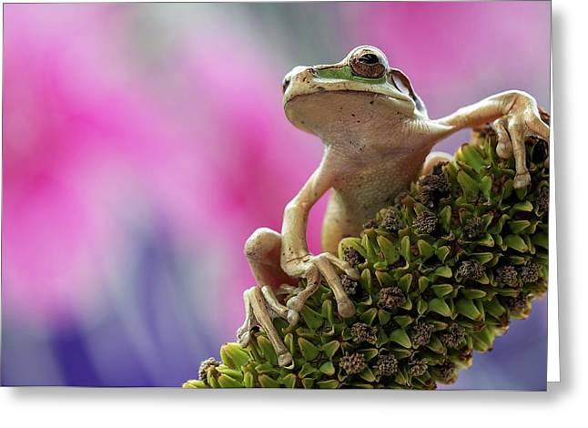 Masked Tree Frog Greeting Card