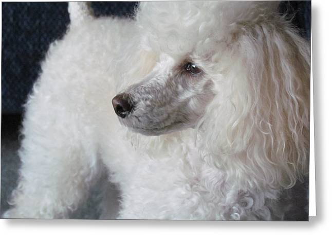 Maski Small White Poodle  Greeting Card by Joyce Woodhouse