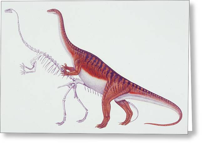 Massospondylus Dinosaur Greeting Card by Deagostini/uig
