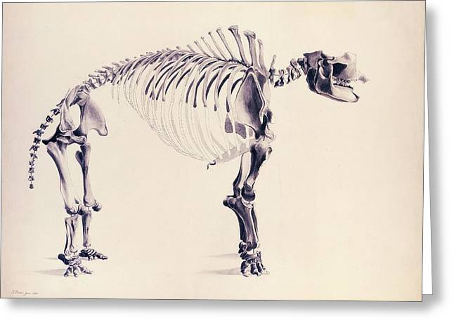 Mastodon Fossil Skeleton Greeting Card