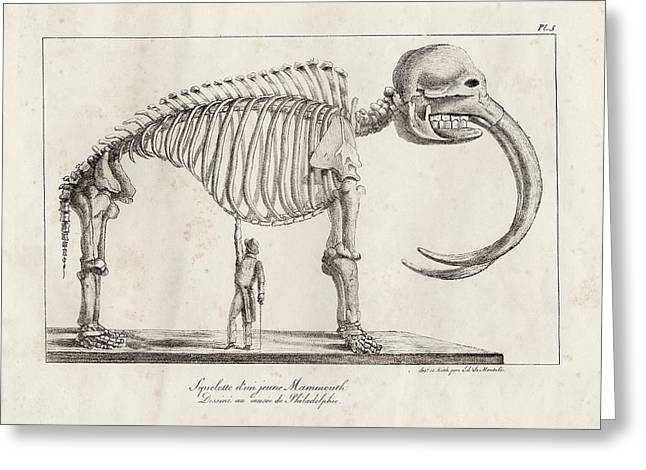 Mastodon Skeleton Greeting Card