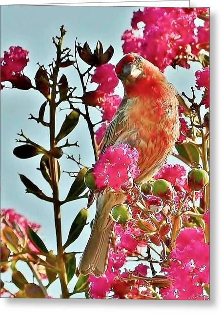 Matching Colors - Red Bird Greeting Card