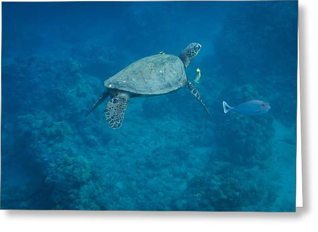 Maui Sea Turtle And Unicorn Fish Greeting Card