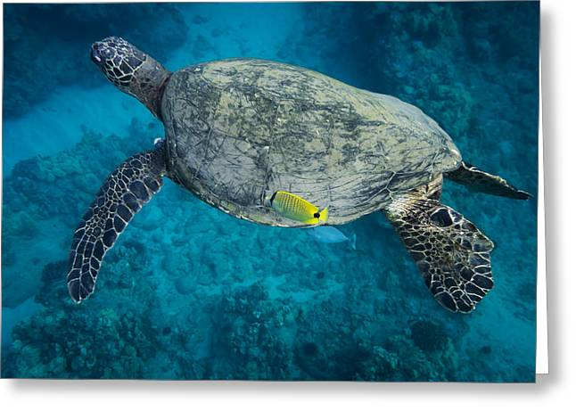 Maui Sea Turtle Cleaning Greeting Card