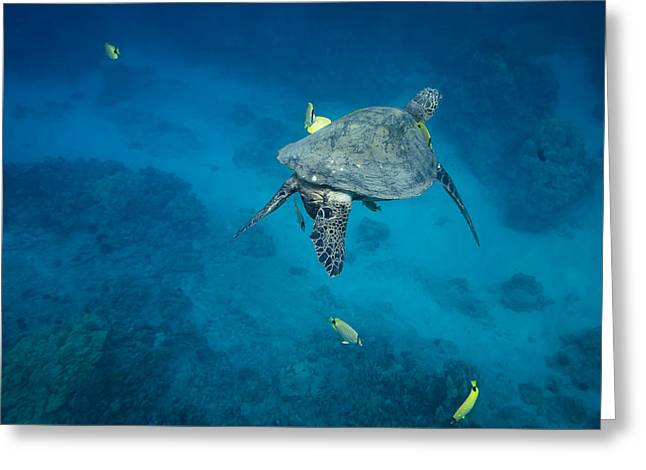 Maui Sea Turtle Cleaning Station Greeting Card