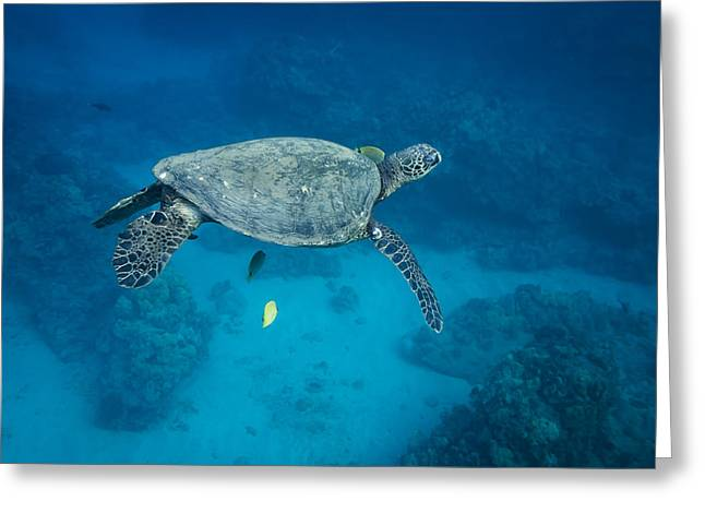 Maui Sea Turtle Suspended With Tail Tucked Greeting Card