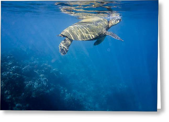 Maui Sea Turtle Takes A Breath At The Surface Greeting Card