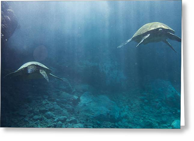 Maui Sea Turtles Farewell Greeting Card