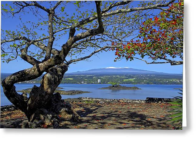 Mauna Kea Volcano Over Hilo Bay Hawaii Greeting Card by Daniel Hagerman