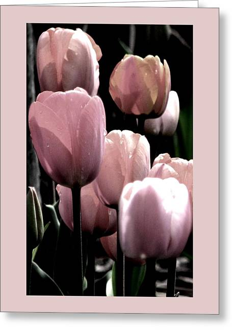 Mauve In The Morning Greeting Card