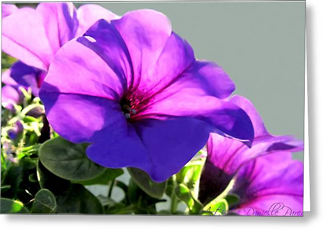 Mauve Petunia Trio Greeting Card by Danielle  Parent