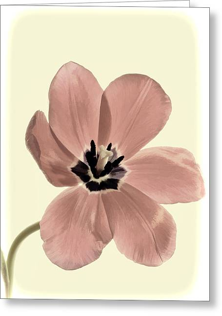 Mauve Tulip Transparency Greeting Card