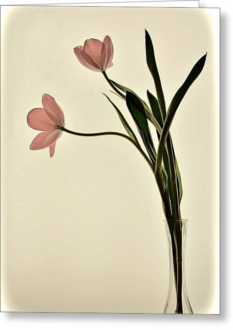 Mauve Tulips In Glass Vase Greeting Card