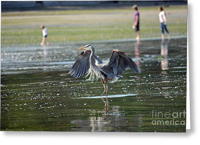 May Day Waders Greeting Card by Gayle Swigart