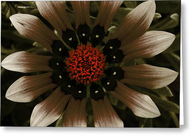 Greeting Card featuring the photograph May May  by Janice Westerberg