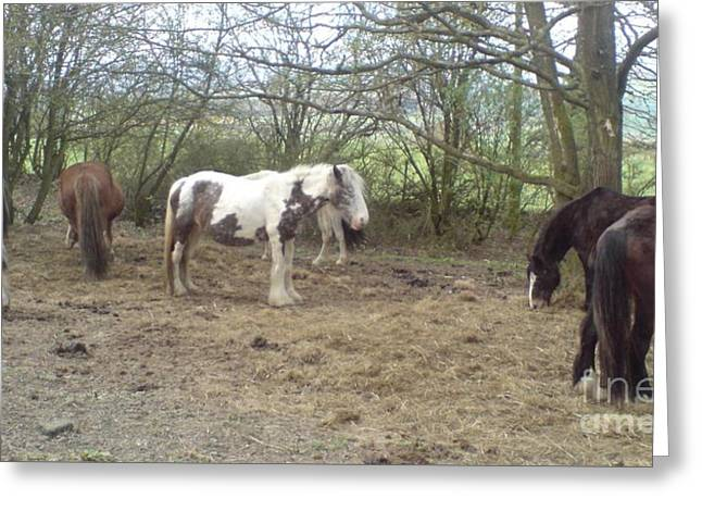 May Hill Ponies 1 Greeting Card