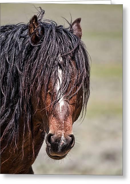 Mccullough Peaks Stallion Greeting Card by Jana Thompson