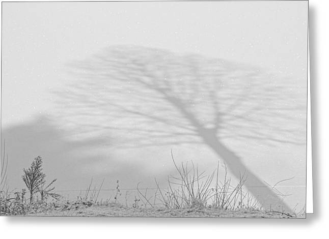 Me And My Shadow Black And White Greeting Card by James BO  Insogna