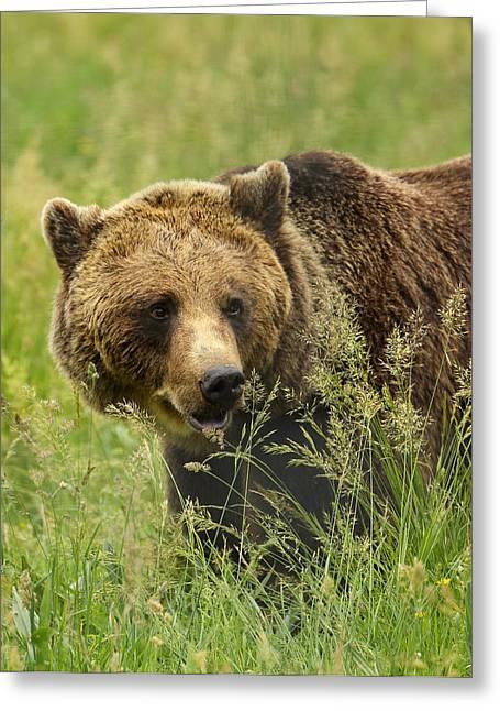 Meadow Bear Greeting Card by Victoria Hillman