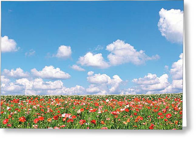 Meadow Flowers With Cloudy Sky Greeting Card