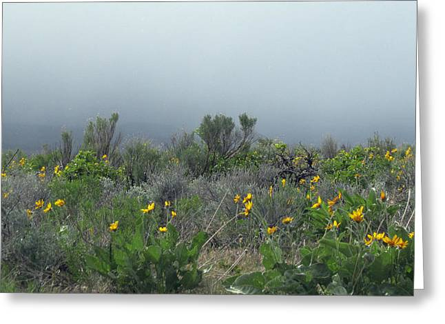Greeting Card featuring the photograph Meadow Fog by Jennifer Muller