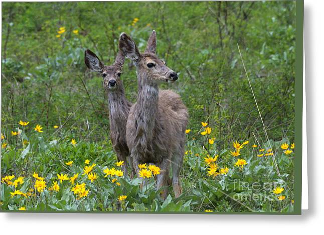 Meadow Meal Greeting Card