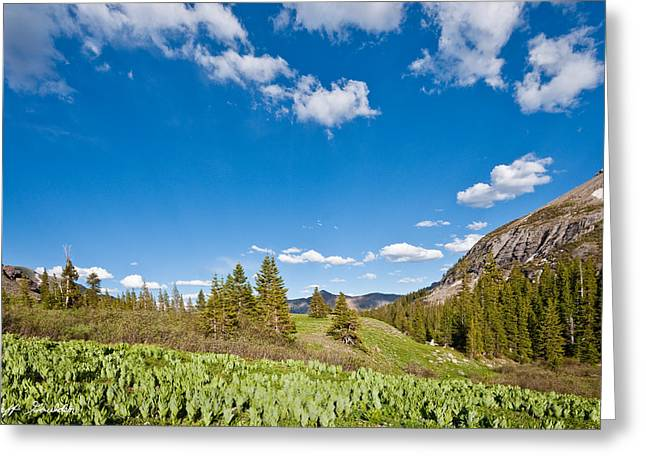 Greeting Card featuring the photograph Meadow Of False Hellebore by Jeff Goulden