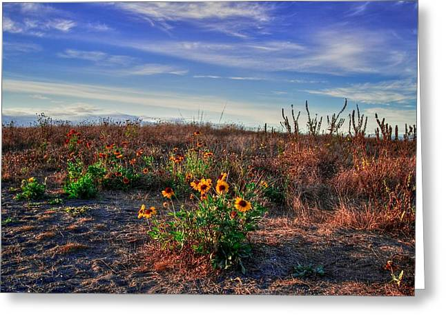 Greeting Card featuring the photograph Meadow Of Wild Flowers by Eti Reid