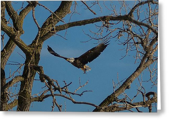Meal In Flight Greeting Card by Joe Scott
