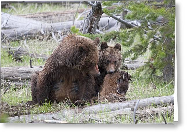 Mealtime Greeting Card by Gerry Sibell