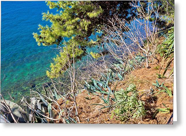 Mediterranean Plants By The Sea Greeting Card