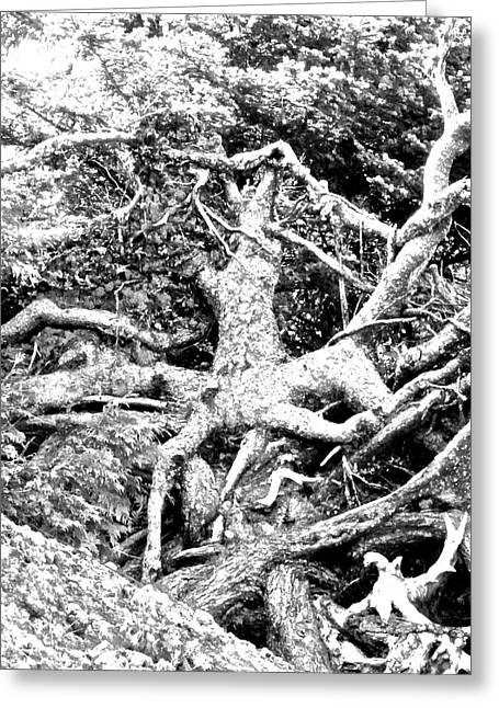 Medusa Tree Roots Greeting Card by Brian Sereda